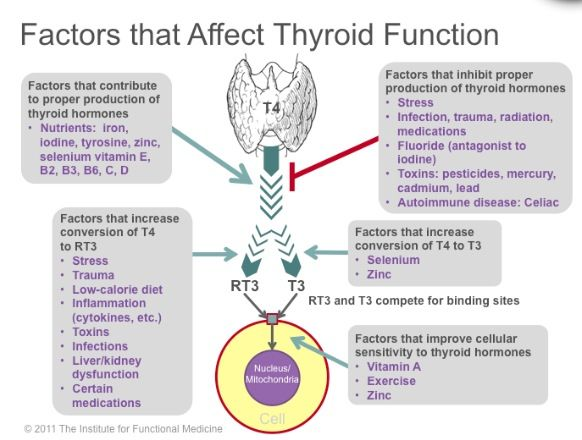 Factors that influence your Thyroid Function