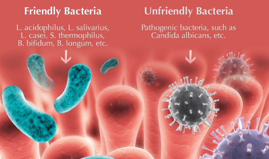 Good bacteria vs bad